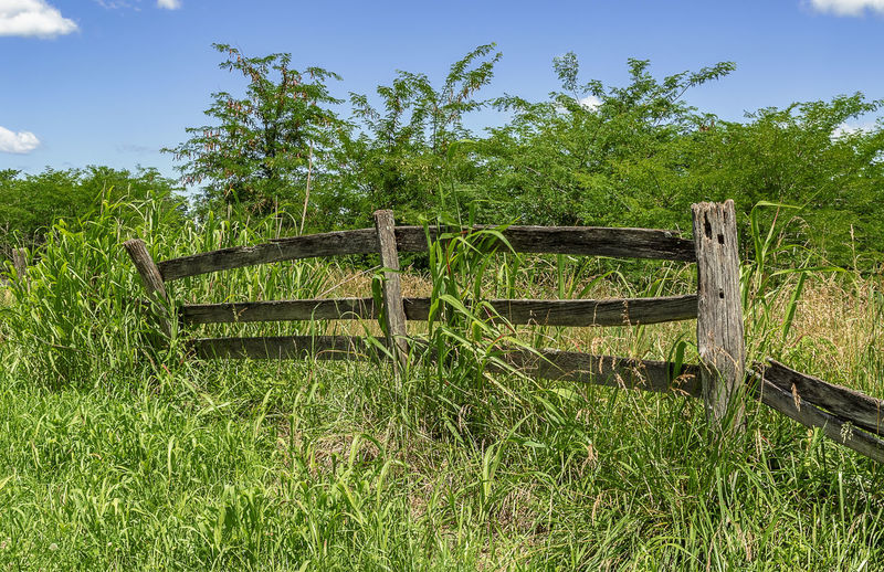 A decaying wooden fence in a rural area. Plant Grass Wood - Material Nature Green Color Land Field Sky Tree Growth Day No People Fence Barrier Boundary Tranquility Beauty In Nature Outdoors Landscape Sunlight Blue Sky Decaying Clouds Rural Scene Countryside