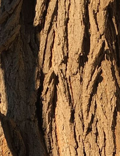 Texture. Tree bark. Geometric. Brown. Shadows. Full frame Close-up Outdoors Day No People. Beauty In Nature Diamond Pattern