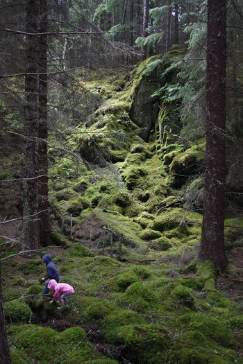Hand held snap if my kids enjoying the spongy moss covered woodland near Lochness Scotland Tree Nature Green Color Outdoors Beauty In Nature First Eyeem Photo