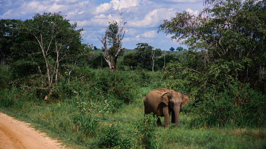 African Elephant Animal Animal Themes Animal Wildlife Animals In The Wild Day Eco Tourism Elephant Forest Grass Indian Elephant Landscape Mammal Nature No People Outdoors Tree