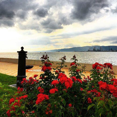 Degirmendere Sahil Deniz çiçek Doğa Nature Flowers Sea