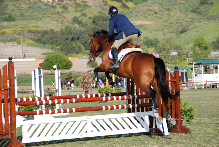 Outdoors Bright Day One Animal Mammal Horse Brown Domestic Animals Horse Jumping Competition Sports Photography