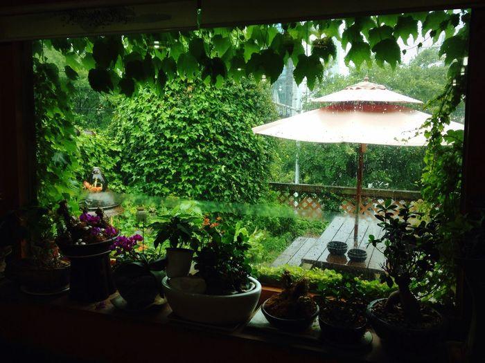 비 Rain Summer First Eyeem Photo