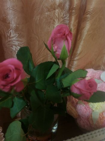 Flowers Roses Have A Nice Evening Perm Russia Spring Amazing