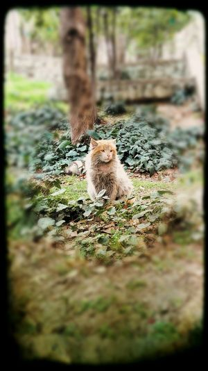 Our lovely cats in the university... Animals In The Wild Mammal Nature Outdoors Nature Photography Mobilephotography Sky Day Cat Animals Pet Unversitytime University Campus One Animal Animal Themes Persian Cat  No People