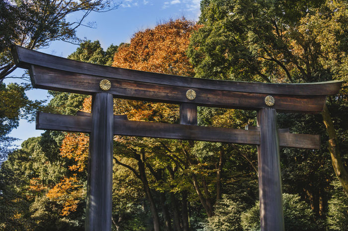 A gateway in Meiji Shrine in Tokyo, Japan. EyEmNewHere Japan Meiji Jingu Meiji Shrine Shrine Autumn Beauty In Nature Close-up Day Low Angle View Nature No People Outdoors Tree