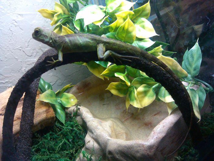 Reptile Mylizard Lizard Love Snapshot Rex