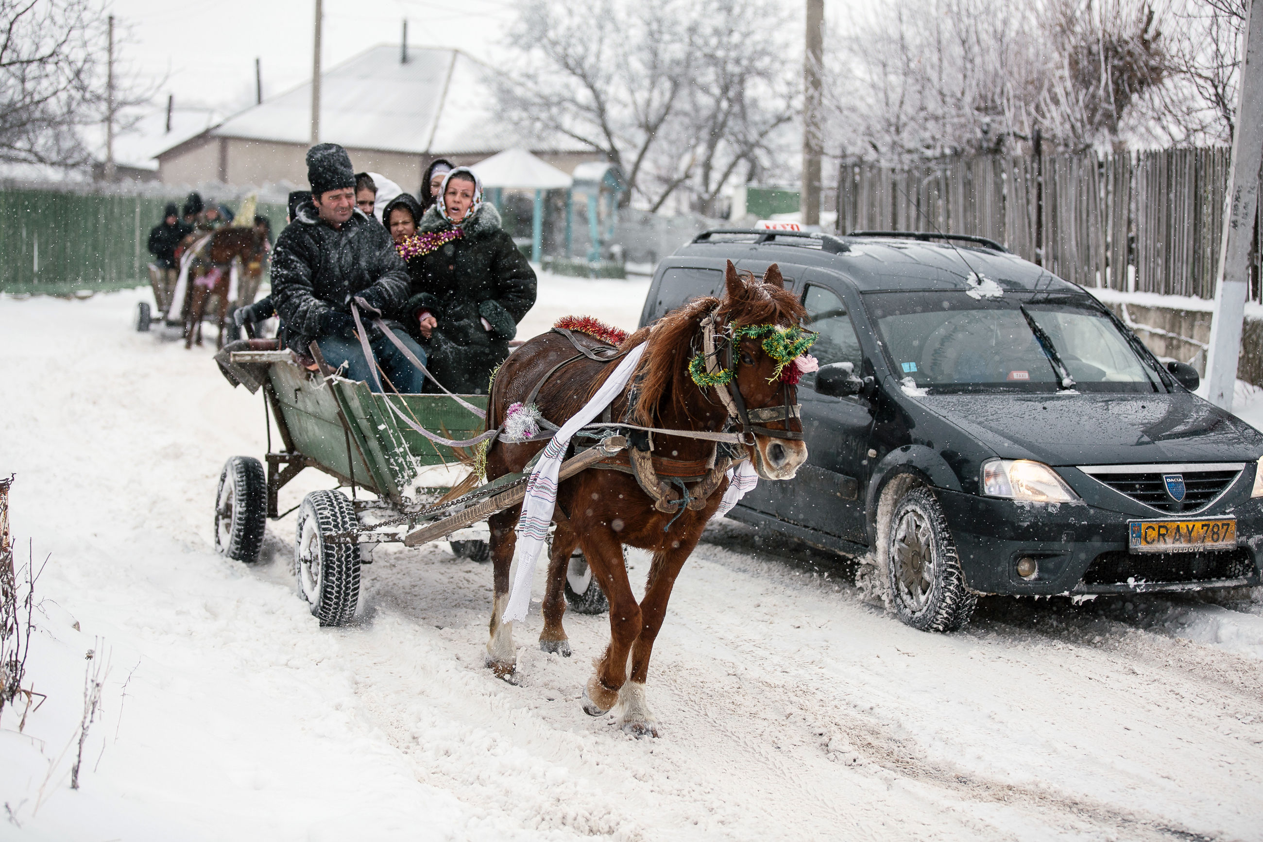 mode of transportation, winter, transportation, snow, mammal, domestic animals, cold temperature, domestic, pets, car, motor vehicle, real people, one animal, men, land vehicle, day, warm clothing, outdoors