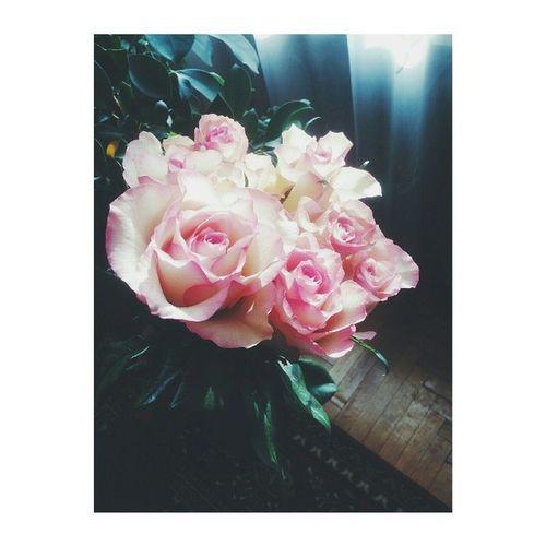 Roses ???? Gi Negalima Nenufotkint