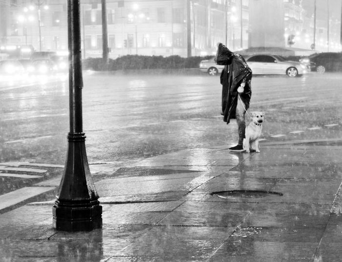 The Street Photographer - 2017 EyeEm Awards Rain Rain Dogs Streetphotography Streetphoto_bw Street Photography Black & White