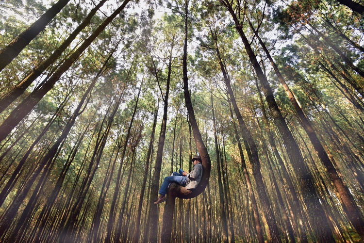 Low Angle View Of Man On Tree In Forest
