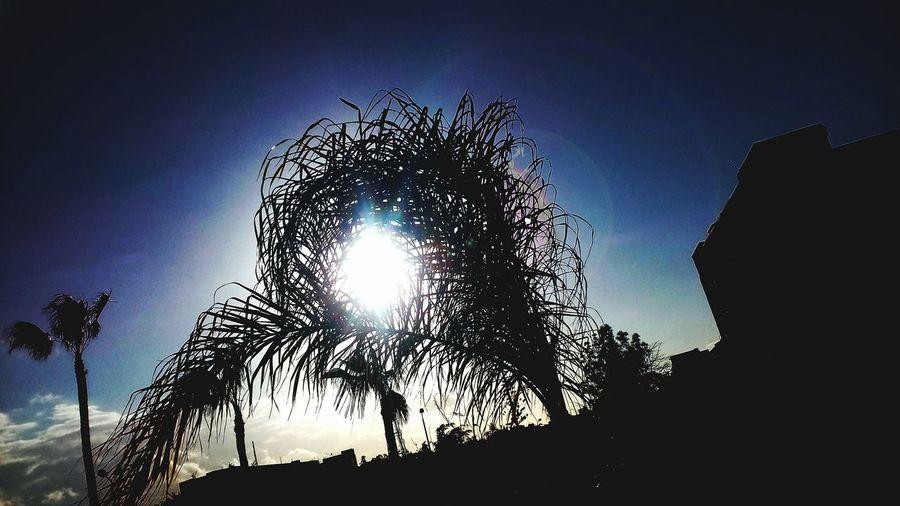 Palm-tree with sun like eay Lenovo Tree Tree_collection  Nature_collection Naturelovers Flowers,Plants & Garden Palm Tree Pslm Trees Palm Leaf Palms Palm Springs Palma De Mallorca Palmas Psd  Photoshop Photo Pixelated Silhouette Sky Entertainment Firework