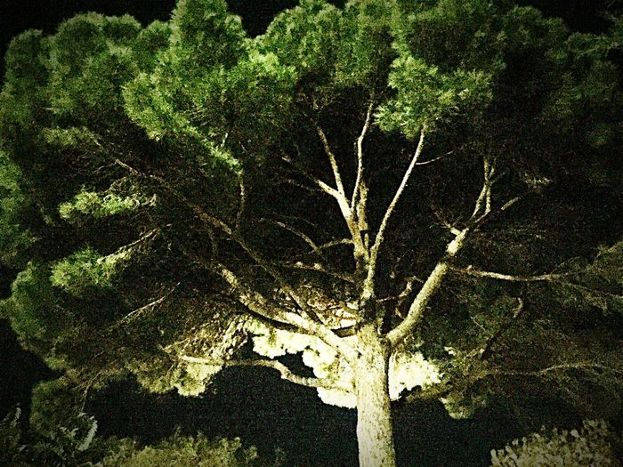 Baum Night Nature Green Color