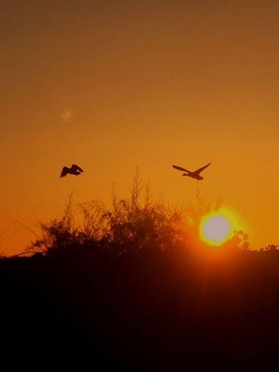 Beautiful sunset Ducks And Sunset Sunset #sun #clouds #skylovers #sky #nature #beautifulinnature #naturalbeauty #photography #landscape IPhone Photography Birds_collection Nature_collection Enjoying Nature Sunset_collection (null)Chuylui Photography