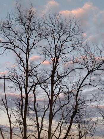 Gods Art Gods Beautiful Creation My Cloud Obsession☁️ Cloud Porn Cloud_collection  Things I Like Tree And Sky Tree Silhouette Tree Porn
