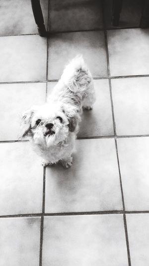 My lovely dog First Eyeem Photo