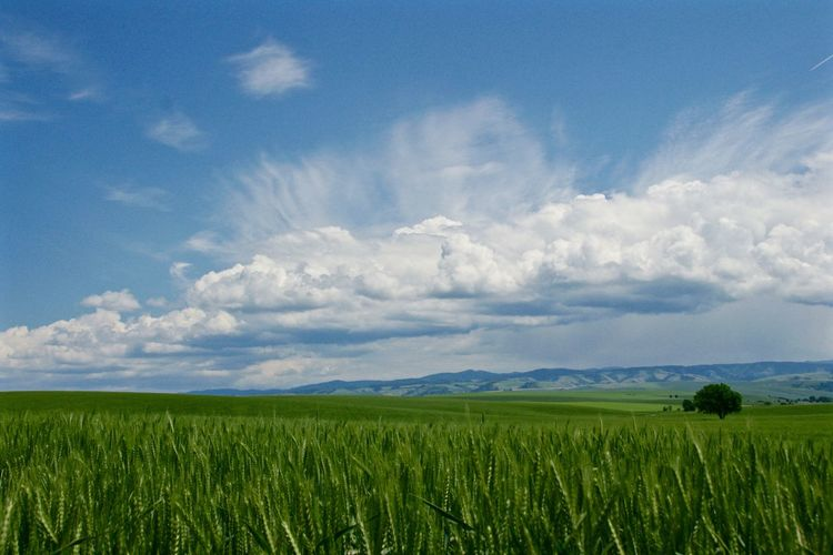 Agriculture Beauty In Nature Cloudscape Farm Landscape Nature Outdoors Sky Tranquil Scene Wheat Field