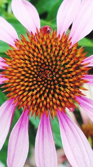 Up Close Flower Flower Collection Flowers, Nature And Beauty Pink Flower Flower Closeup Flower Collection Eye Em Nature Lover