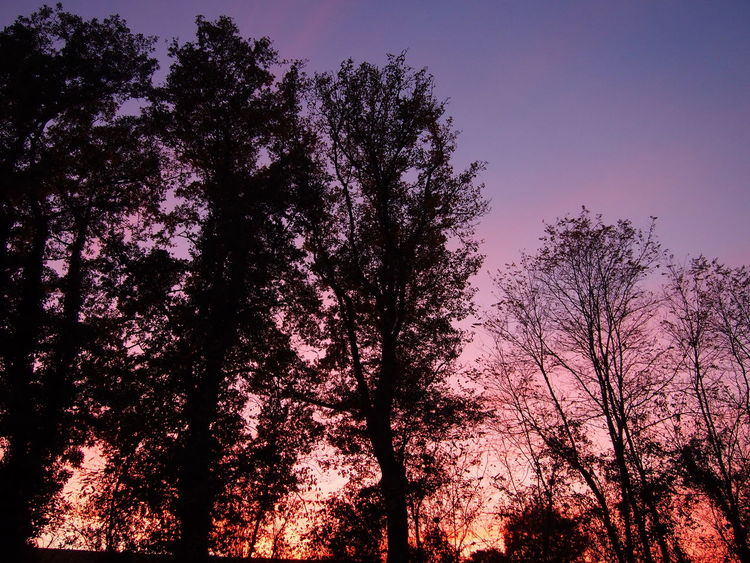 Silhouettes Trees Sky_collection Colorsfull Color Photography Auga 64 Aquitaine Pyrenees Atlantique
