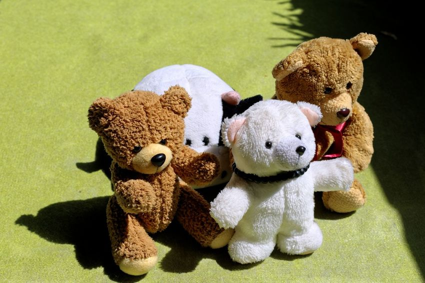Million of hug Bandung Shooter Indonesian Shooter Stuffed Toy Toy Teddy Bear No People Softness Animal Representation Indoors  Two Objects Brown Still Life Group Of Objects Mammal Close-up Cute Stuffed Studio Shot Representation Animal Themes Animal Small Group Of Objects