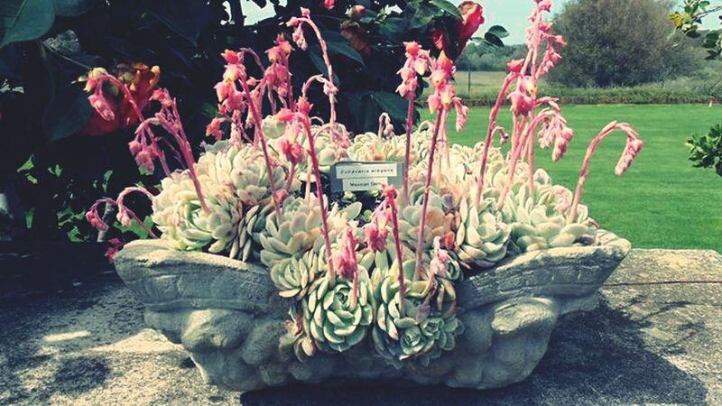 Filoli Flowers,Plants & Garden Plants