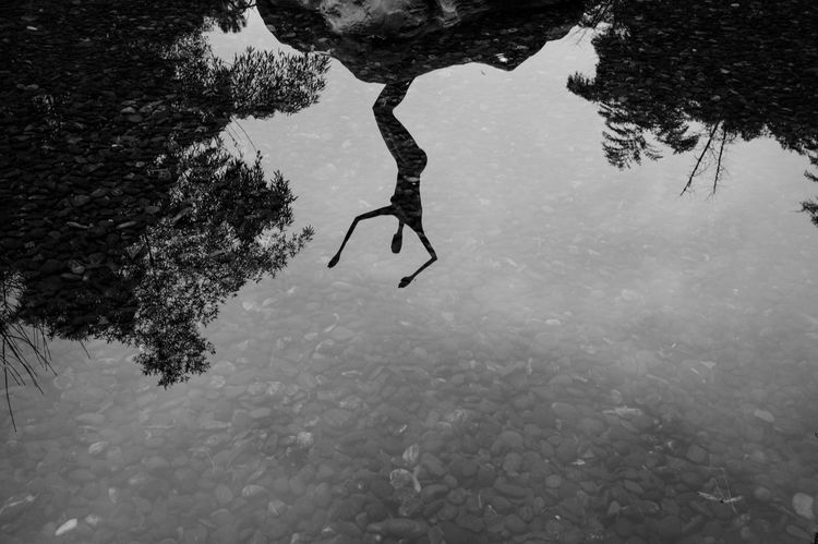Water Tree Nature Plant Reflection Day Underwater Lake High Angle View One Person Real People Swimming Outdoors Animals In The Wild UnderSea Blackandwhite Mirror Scupture