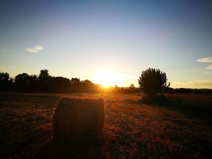 Field Barjac Gard Rural Scene Sky Nature Sunset Hollidays Beauty In Nature France 🇫🇷 Summer Holidays