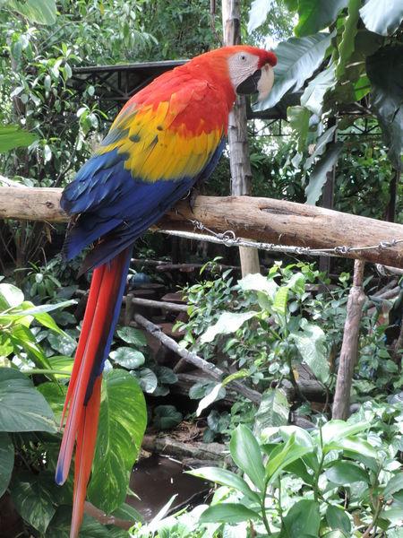 Animal Ara Macao Bird Day Life Nature Outdoors Scart Macaw