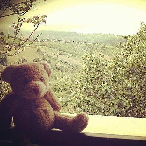 Accidia. 100happydays Day16 Teddybear Bear loneliness rainyday cloudy igersItalia igersAbruzzo igersteramo photography photooftheday picoftheday instadaily instamood sadness