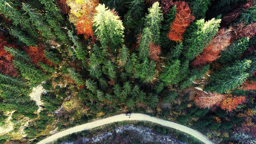 Forest Trees Forestphotography Aerial Photography River EyeEm Nature Photography EyeEm Best Shots EyeEm Nature Lover EyeEm Selects A New Beginning Backgrounds Full Frame Multi Colored Pattern Close-up EyeEmNewHere