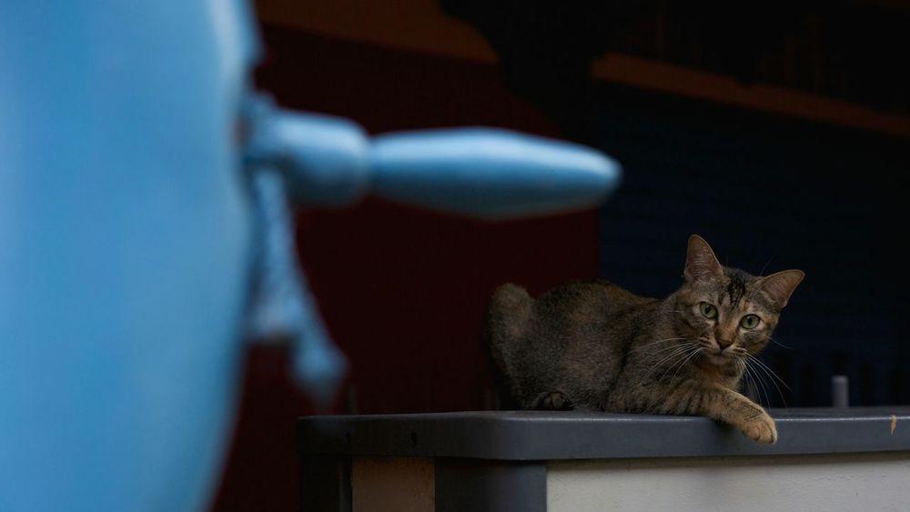 Canon5Dmk3 My Photographic World EyeEm Best Shots - My World Tadaa Community Tadaakitties EyeEm Best Shots Cats Cat Lovers Kitty Cat Eyeem Best Shots - Animals