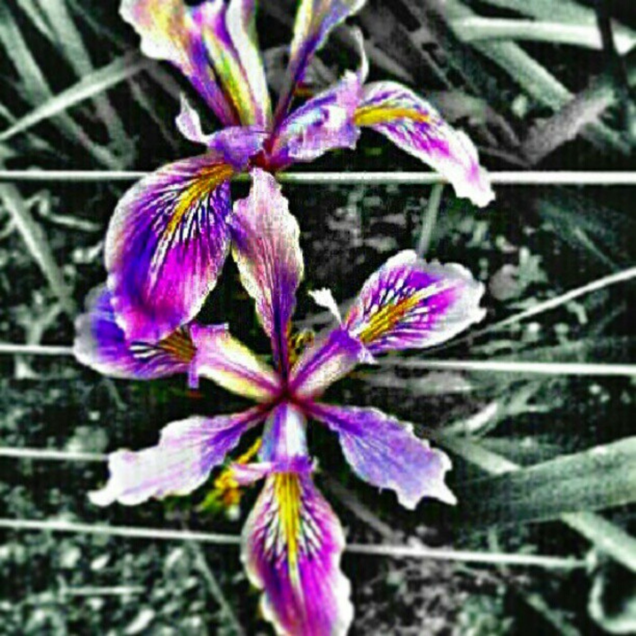 flower, freshness, fragility, growth, close-up, purple, petal, focus on foreground, flower head, nature, beauty in nature, plant, blooming, stem, in bloom, day, botany, outdoors, blossom, no people