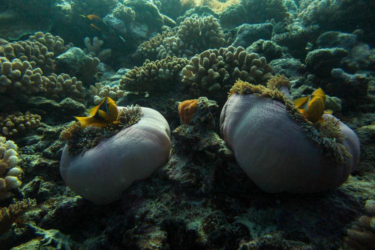 Full Frame Shot Of Coral In Sea