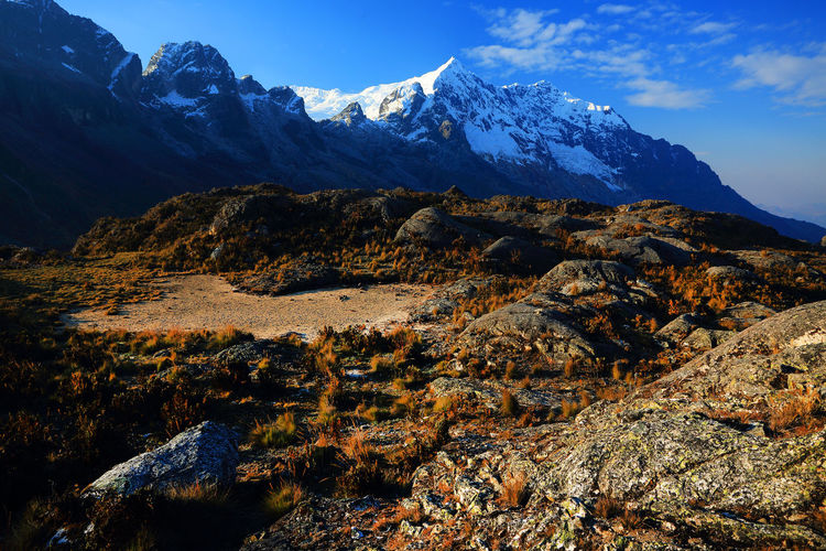 Dry grass on rocks by snowcapped mountain peak