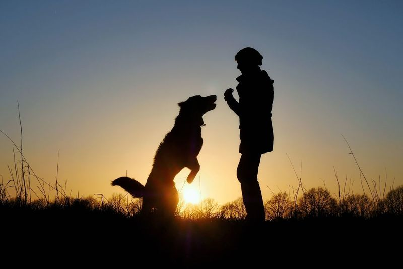 Silhouette man and dog on field against sky during sunset