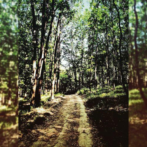 Forestroad Lonelyroad Naturecalls