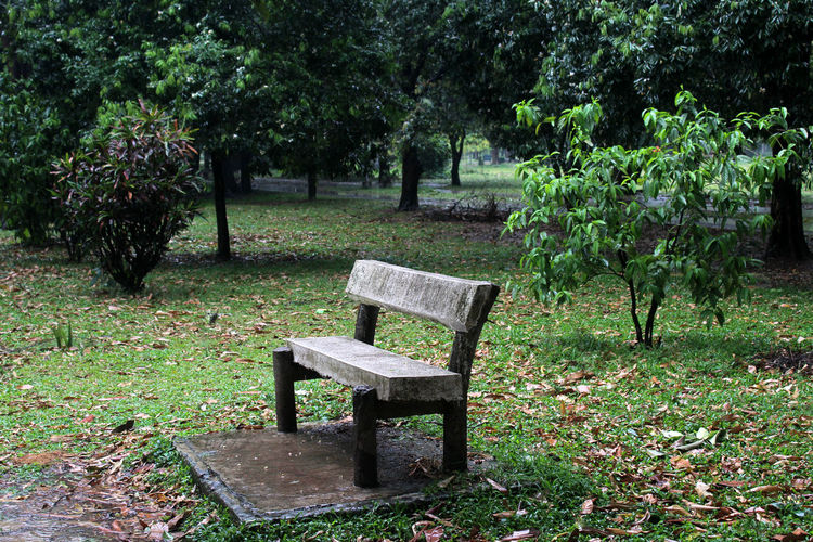 Plant Tree Seat Bench Nature Park Growth Green Color Grass Day Tranquility Park - Man Made Space No People Empty Park Bench Outdoors Absence Beauty In Nature Leaf Chair