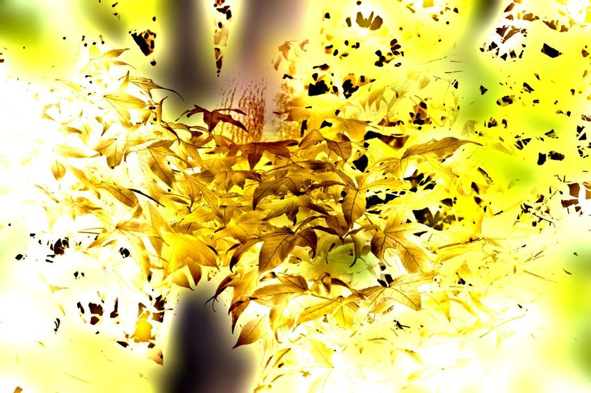 Beauty In Nature Close-up Fragility Freshness Full Frame Green Color Leafs Colors Nature Tranquility Tree_collection  Vibrant Color Yellow Yellow Color