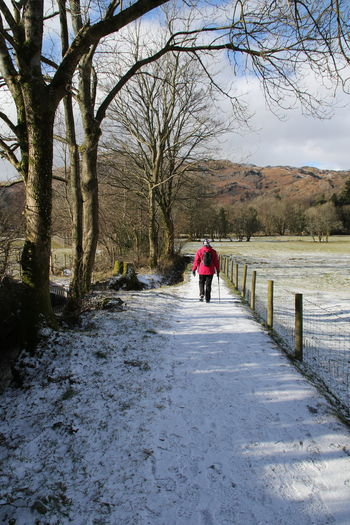 Cumbria England UK Grassmere Hiking Lake District Backpack Bare Tree Beauty In Nature Branch Cold Temperature Day Full Length Lifestyles Nature One Person Outdoors People Real People Rear View Sky Snow The Way Forward Tree Walking Warm Clothing Winter