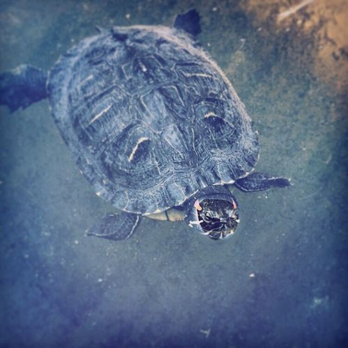 RePicture Ageing Turtle Love Agenobar Age EyeEm Nature Lover