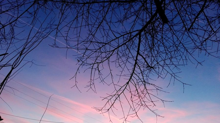 Branch Bare Tree Low Angle View Outdoors Sunset Tree Sky Nature No People Huaweiphotography Showcase: February Showcase: 2017 Veronicaionita Wolfzuachiv Eyeem Market Ionitaveronica On Market @WOLFZUACHiV Pink Clouds Beautiful Sky Dramatic Sky Cloud - Sky Ionita Edited By @wolfzuachis Millennial Pink