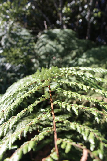 Close Up Technology Nature Green Color Winter Beauty In Nature Forest Growth Snow Cold Temperature Tree Close-up Christmas Tree Day Outdoors Coniferous Tree Landscape_photography No People Needle - Plant Part Fir Tree Plant Branch Nature