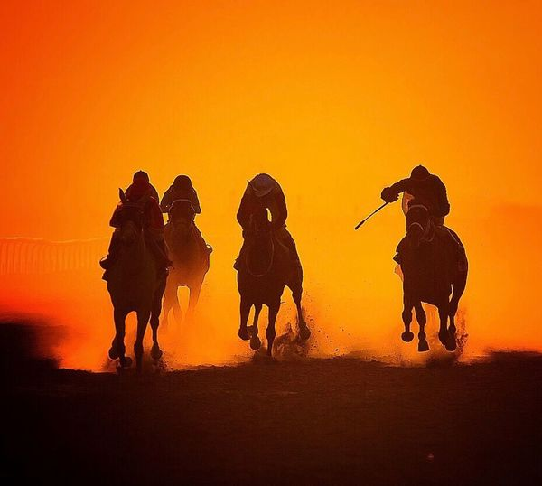 Golden riders Sports Photography Horses Horse Photography  Horse Racing Goldenhour Sunset Riding Silhouette Mammal Domestic Animals Desert Full Length Outdoors Horseback Riding Togetherness People Nature Sky