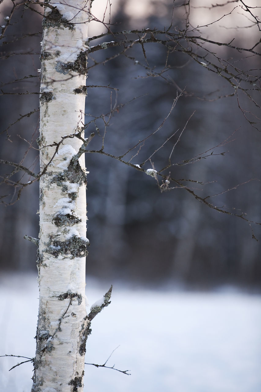 tree, plant, tree trunk, trunk, focus on foreground, winter, cold temperature, nature, branch, snow, no people, day, outdoors, close-up, forest, smoke - physical structure, land, sign, frozen, dead plant