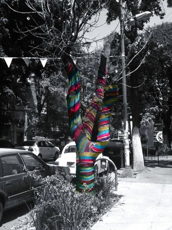Yarn Bombing Eye4photography  For The Love Of Trees ~ CutOut