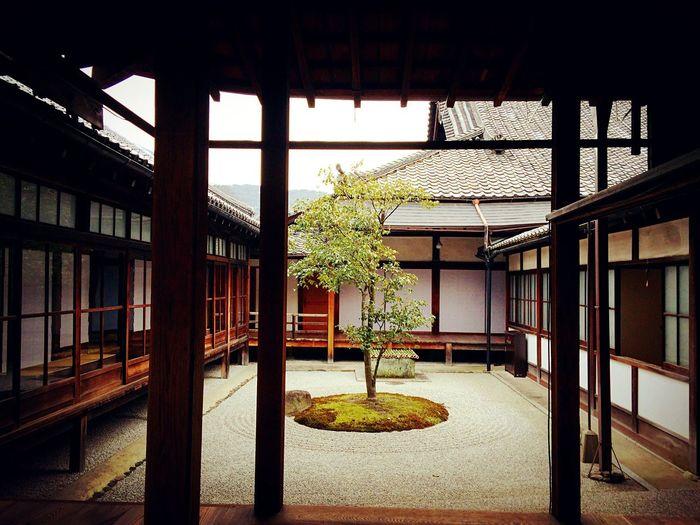 建仁寺 京都 Kyoto Kyoto, Japan Kyoto Garden Japanese Garden 3XSPUnity Travel Destinations Tree Hello World Relaxing Enjoying Life Garden