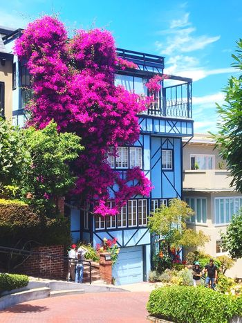 One of my favorite houses that I've ever seen!! Architecture Building Exterior Built Structure Flower Growth Tree Outdoors Day No People Plant Pink Color Sky Nature People Travel Destinations Travel Traveling Vacations Sommergefühle Let's Go. Together. EyeEmNewHere