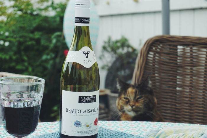 a glass of red wine please.... Domestic Cat Pets One Animal Text Animal Themes Domestic Animals No People Mammal Day Feline Outdoors Close-up Cats Of EyeEm Cats Cat Food And Drink Drink Alcohol Summer Red Wine Summertime Beaujolais Beaujolais-villages Nouveau