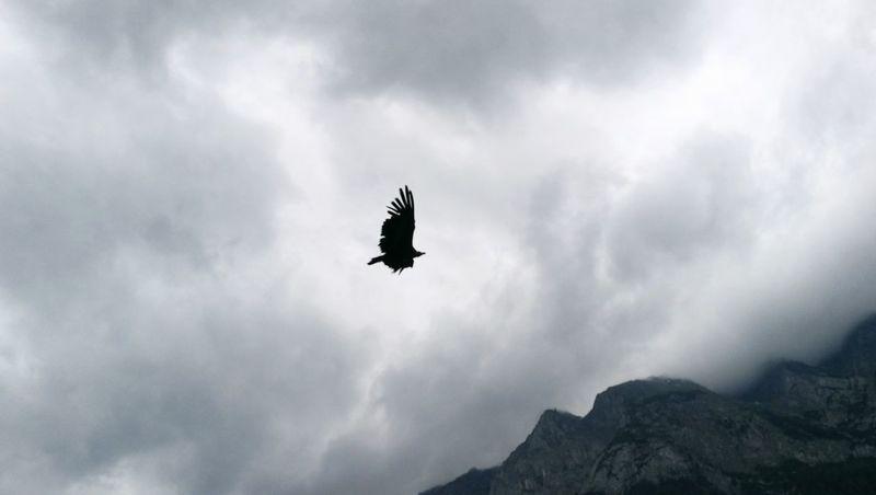 Eagle Nature Mountains Alpes