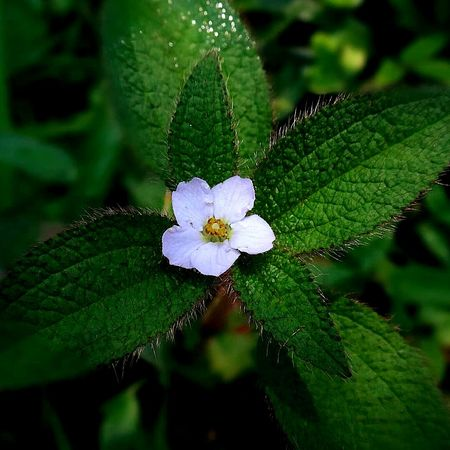 Flower Green Color Nature Beauty In Nature Fragility Plant 📷🌹 Perspectives On Nature